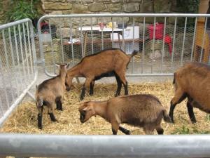 Petting Zoo 1