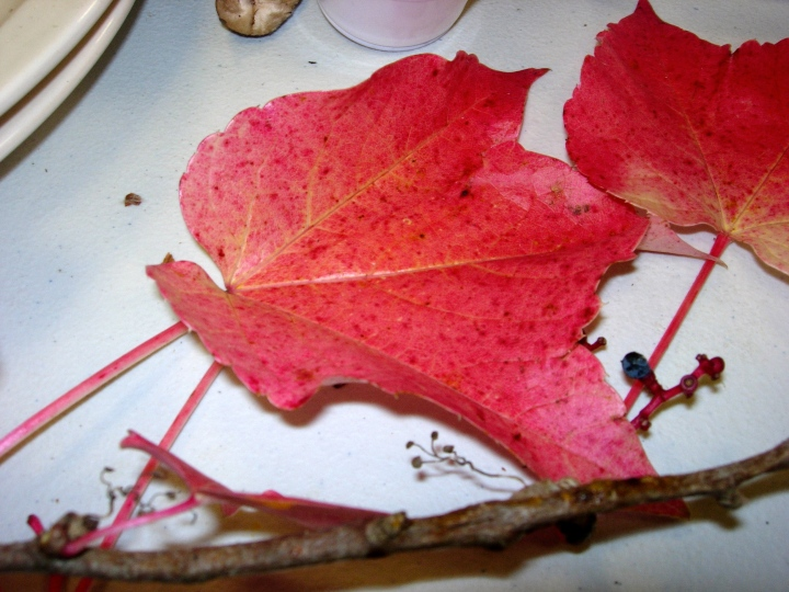 Leaves from nearby provide the perfect centerpiece